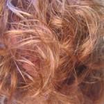 recettes de shampoings colorants naturels pour vos cheveux